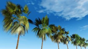 Mexicanska palmträd mot himlen, tropisk panorama Royaltyfri Fotografi