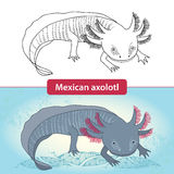 Mexicanum axolotl before transformation. Ambystoma tigrinum. vector illustration