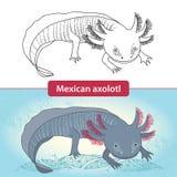 Mexicanum-Axolotl vor Umwandlung Ambystoma tigrinum Lizenzfreie Stockbilder