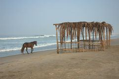 Mexico. Horse on the beach of Playa Azul in Michoacan, Mexico Stock Images