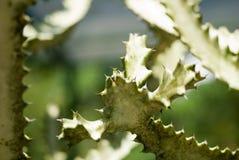 Mexico Cactus Stock Image