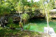 mexico Cenote Arkivbilder