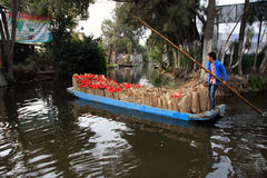 Mexico City, Mexico - November 24, 2015: Boy on canal boat delivering bags of fresh Poinsettia - Xmas/Christmas Flower in Xochimil Stock Images