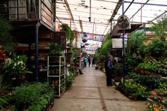 Plant nursery in Coyoacan Mexico. royalty free stock images