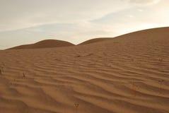 Mexico Desert Stock Image