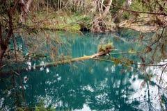 mexico flod Royaltyfria Foton