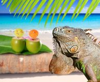 Mexico iguana in coconut Caribbean beach. Tropical turquoiuse sea Stock Photo