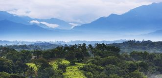 Mexico Jungle Landscape Stock Image