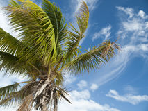 mexico palmträd Royaltyfria Bilder