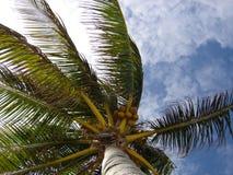 Mexico Palmtree Royalty-vrije Stock Foto