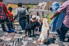 MEXICO - SEPTEMBER 21: Two dogs climbing the Pyramid of the Sun along with a group of tourists. September 21, 2017 in Teotihuacan, Mexico stock photos