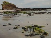Mexico strand Fotografering för Bildbyråer