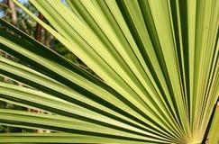 mexico växt Arkivbilder