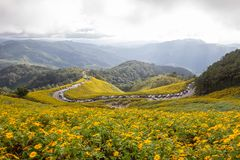 Mexikaner SunflowerBua-Zangenhügel von Doi Mae U-Kho in Bezirk Khun Yuam, Mae Hong Son, Nord-Thailand Im November blühen und D Lizenzfreie Stockfotografie