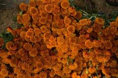 Mexikanische Blumen Lizenzfreie Stockfotos