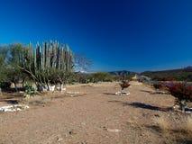 Mexikanische Landschaft in einer Gebirgswiese Stockbilder