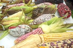 Mexikanische Maisverschiedenartigkeit, weißer Mais, schwarzer Mais, blauer Mais, roter Mais, wilder Mais und gelber Mais an einem Stockfotos