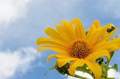 Mexikanische Sonnenblume Lizenzfreies Stockbild