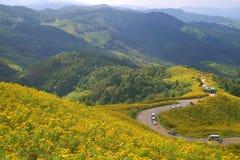 Mexikanische Sonnenblumen Stockfotografie