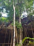 Mexikanischer Banyanbaum im Dschungel lizenzfreie stockbilder