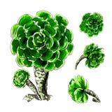 Mexikanischer Kaktus-Satz Stockfoto