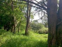 Mexikanischer Wald Lizenzfreie Stockfotos