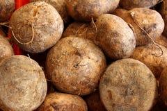 Mexikanisches Gemüse der Jicama Yamswurzelbohne Nahrungsmittel stockbild