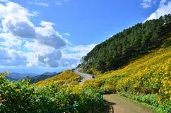 Mexikanisches Sonnenblumenfeld stockbild