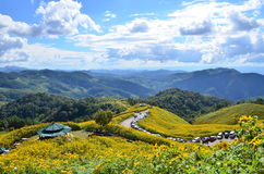 Mexikanisches Sonnenblumenfeld lizenzfreie stockfotos