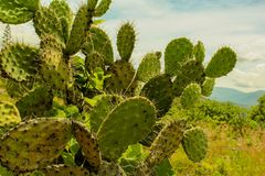 mexikansk orange vektor för bakgrundsliggande Royaltyfri Foto