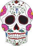 mexikansk skalle Arkivfoto