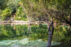 Mexiko-cenotes Yucatan Lizenzfreie Stockbilder