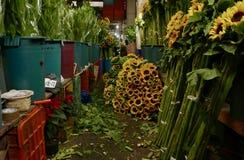 Mexiko City, Mexiko 11. Dezember 2017: Das Blumen-Markt Mercado De Jamaika in Mexiko City Lizenzfreies Stockbild