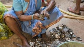 Mexilhões da limpeza das mulheres indianas após a pesca A vida de um peixe Fotos de Stock