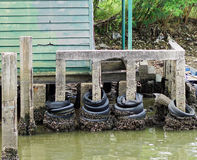 Mexilhões no rio stone_1 Imagem de Stock
