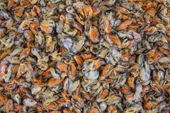 Mexilhões sem shell Imagem de Stock