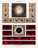 Meyer Antique Astronomy Print 1875 av den sammanlagda sol- förmörkelsen av Juni 18, 1860 Royaltyfri Foto