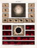 Meyer Antique Astronomy Print 1875 do eclipse solar total do 18 de junho de 1860 Foto de Stock Royalty Free