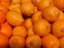 Meyer lemmon owoc dla sprzedaży przy Komarovsky rynkiem w norkach Białoruś Zdjęcie Stock