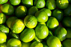 Meyer Lemons or Limes Royalty Free Stock Photo