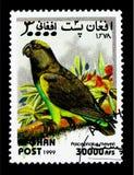 Meyers papegoja (den Poicephalus meyerien), papegojaserie, circa 1999 Arkivbilder