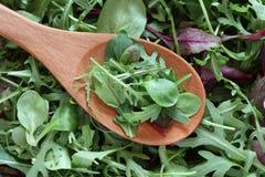 Mezcla de ensaladas verdes en una cuchara de madera Fotografía de archivo