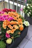 Mezcla de flores hermosas en el jardín de la terraza de la caída Fotos de archivo