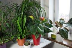 Mezcla de houseplants en el cuarto blanco Foto de archivo libre de regalías
