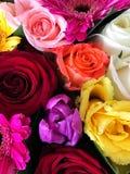 Mezcla de la flor Fotografía de archivo libre de regalías