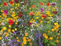 Mezcla de la flor salvaje con las amapolas y las porciones de abejas Fotos de archivo libres de regalías