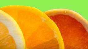 Mezcla de la fruta cítrica Fotografía de archivo