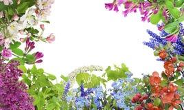 Mezcla de las flores de mayo del resorte Imagenes de archivo