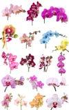 Mezcla de las orquídeas Imagen de archivo libre de regalías