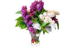 Mezcla de lila común púrpura y del blanco (syringa) en el florero aislado Imagen de archivo libre de regalías